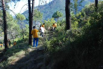 Voluntariat de la CAM